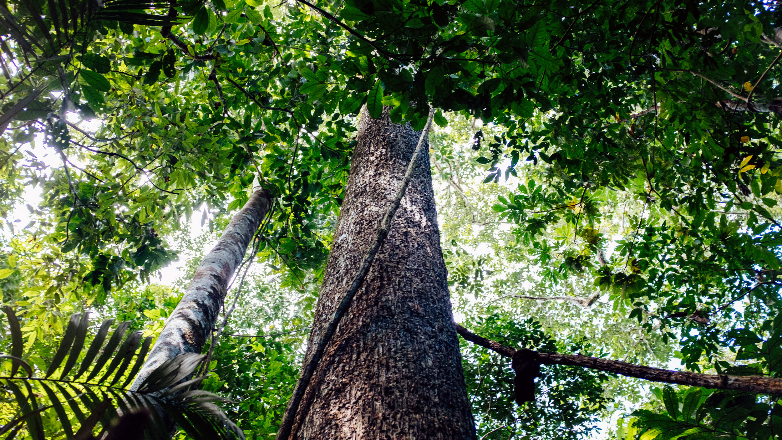 A Third Way To Save The Amazon Make Trees More Valuable